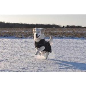 Rehab Hundedækken Softshell